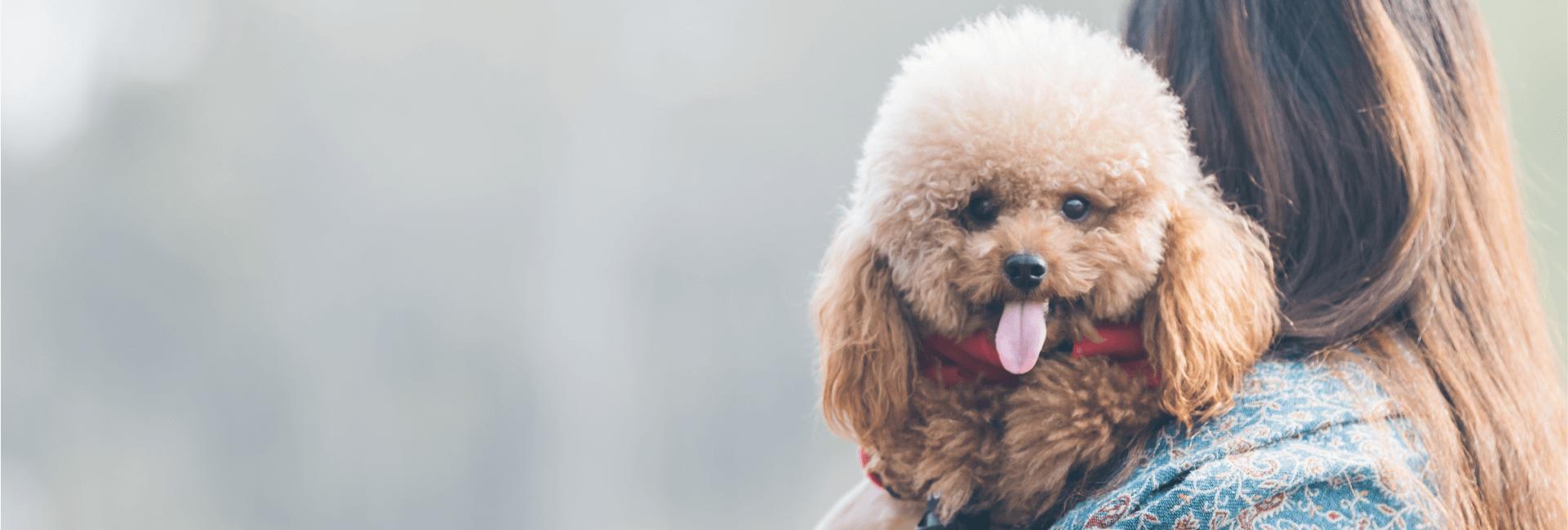 Servicios de asistencia - Asistencia mascota
